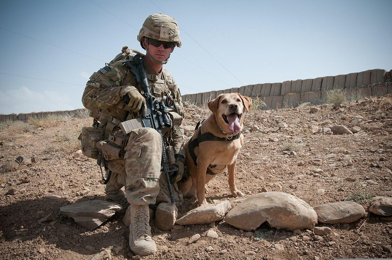 Image Result For Extreme Dog Training