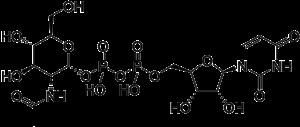 Uridine diphosphate N-acetylglucosamine - Image: UDP N acetylglucosamine