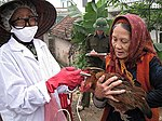 USAID supports the Government of Vietnam's efforts to control avian influenza in Vietnam. (5059392498).jpg