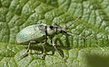 Unidentified insects in Europe 03.jpg