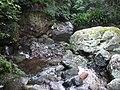 Upper Minnamurra River flowing over Rocks in the Rainforest.jpg