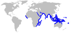 Range of the porcupine ray