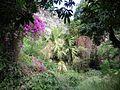 Végétation luxuriante autour de la grotte des 1er Français (3787647579).jpg