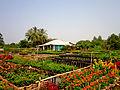 Vườn hoa ở Tân Quy Đông.jpg