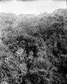 Vegetationsbild. San Fermin, Sydamerika. Bolivia - SMVK - 002413.tif