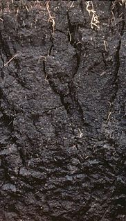 Vertisol Clay-rich soil, prone to cracking