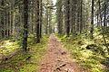 Vesanka - trail.jpg
