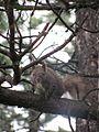 Veverica 1.JPG