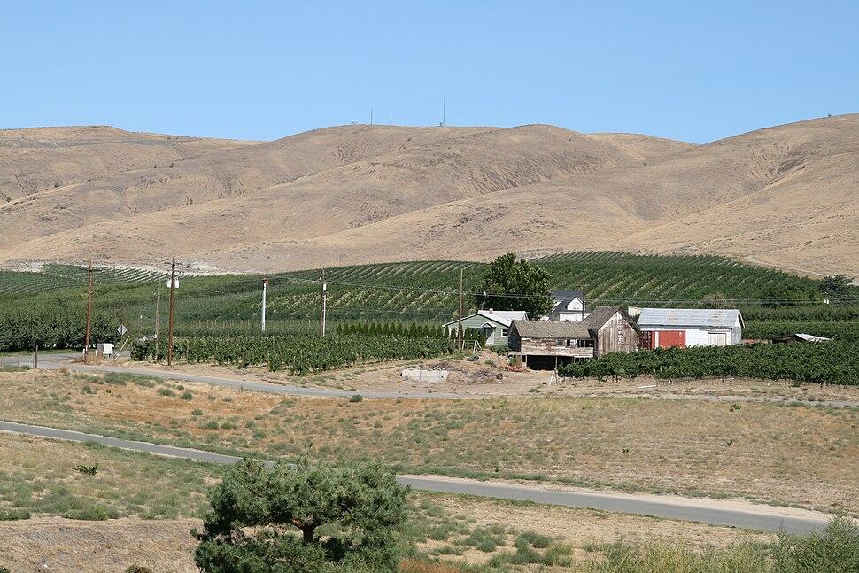 View from Sagelands Vineyard