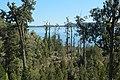 View through forest towards Lake Mahinapua.jpg