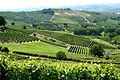 Vineyards in Piemonte, Italy.jpg