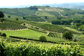 Vineyards in the Italian wine region of Piedmont