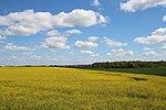 Voie expérimentale de l'Aérotrain le 1er mai 2012 à Limours Champ de Colza 5.jpg
