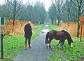 Vrouw met kind en pony mallebos.jpg
