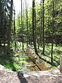 Vyžlovský rybník (036).jpg
