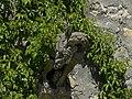 Waidhofen an der Ybbs - Rothschildschloß - Wasserspeier im Burghof.jpg