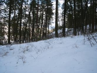 Winfield, British Columbia - Walking through the winter woods towards Winfield