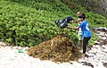 Washington University of barbados Sea Weeds Cleaned by Students.jpg