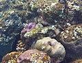 Waspfish Bali.jpg