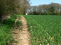 Wayfarer's Walk south of Shere Copse - geograph.org.uk - 1270804.jpg