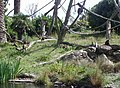 Wellington Zoo Monkey Island.JPG