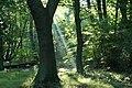West wood near Broxburn - geograph.org.uk - 252860.jpg