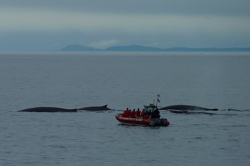 Whales near Tadoussac, Canada. Travel Writers' Secrets: Top Quebec City Travel Tips