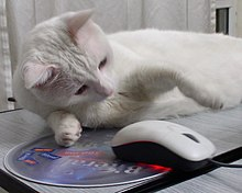 White Cat and a mouse.jpg