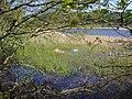 White Loch, Colvend - geograph.org.uk - 877369.jpg