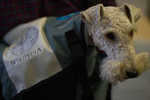 Wikipedia Dog Officey Photos-14.jpg