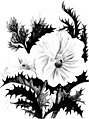 Wild flowers of the Rocky Mountains (microform) (c1889) (17949157701).jpg