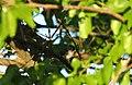 Wildlife birds 14 - West Virginia - ForestWander.jpg