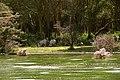 Wildlife on Lake Kongoni.jpg