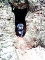 Willi in einem der Eulenbäume - panoramio.jpg