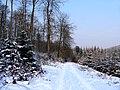 Winter im Teutoburger Wald20.jpg