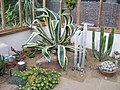 Winterbourne - Arid House - Attack of the octo agave! (5987488708).jpg