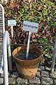 Wuppertal - Hardt - Botanischer Garten 03 ies.jpg