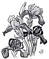 Wyspiański, Irises.jpg