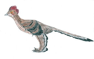 Microraptor - Image: Xiaotingia