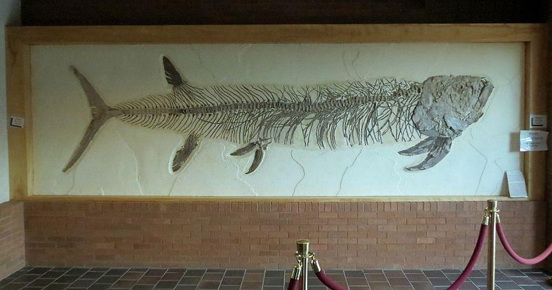 File:Xiphactinus audax, Western Wyoming Community College ...