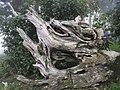 Yemakan Trail 野馬瞰步道 - panoramio (3).jpg