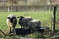 Zaungäste in Hohenbusch.jpg