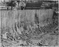 """""""Sheet piling in section F of the west cofferdam exposed in excavating west of block 40."""" - NARA - 294315.tif"""