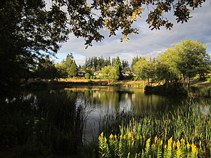 South Surrey - A pond located west of Semiahmoo Shopping Centre