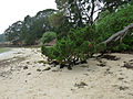Île de Berder-Pin (5).jpg