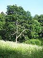 Švenčionių sen., Lithuania - panoramio (30).jpg