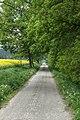 Želiv, Zámečnice, lesní cesta.jpg