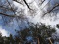 Без названия - panoramio (101).jpg