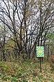Вікові дерева садиби Г. М. Глібова.jpg