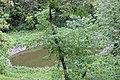 Дендрарій Київського зоопарку (масив дерев) 02.jpg